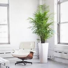 Modern Houseplants by Indoor Plants Nyc Office And House Plant Delivery Service In New
