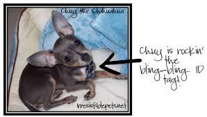 Petsmart Dog Bed Walgreens 9 99 Sale On Select Pet Shoppe Dog Beds Food And