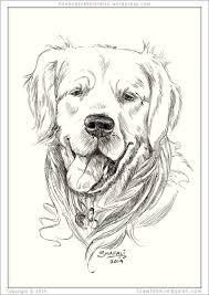 the glamorous golden retriever shafali u0027s pen u0026 ink portrait art