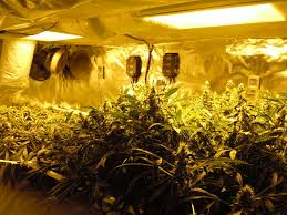 fresh grow room designs architecture nice