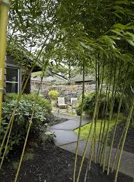 Tropical Plants For Garden - how to capture a tropical feel with plants hardy to the pacific