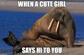 Walrus Meme - sexy walrus latest memes imgflip