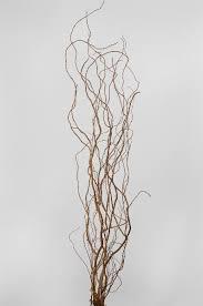 curly willow branches curly willow branches 12 branches 3 4