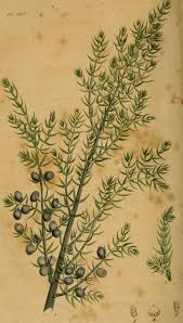 american native plants file american medical botany being a collection of the native