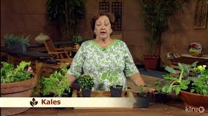container vegetable gardens trisha shirey central texas gardener