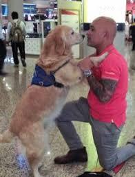 Comfort Retrievers Comforting Furry Angels Mumbai Airport U2013 Dogs And Pups Magazine