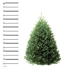 christmas tree delivery 7 ft fraser fir christmas tree hilltop christmas tree delivery