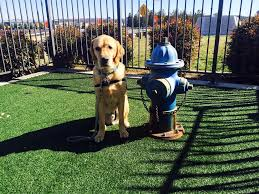 Washington traveling with pets images 10 of the most dog friendly airports in the u s mnn mother jpg