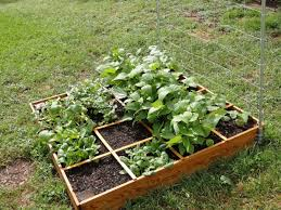 contemporary vegetable garden planner raised bed in backyard at