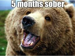 Bear Cocaine Meme - cocaine bear now silly thangs pinterest memes and humour