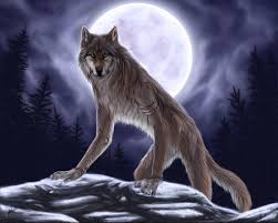 shape shifting about werewolves wolfblood