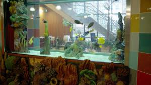 chicago custom aquariums u0026 fish tank company