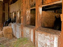 Wallpaper Barn Free Horse Images Page 3