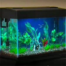 aquarium decoration ideas freshwater freshwater aquarium setup guide fish tank setup
