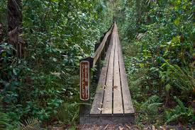 highlands hammock nature trails florida hikes