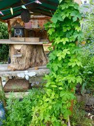 hive entrances making a bee gauntlet keeping backyard bees