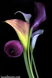 Purple Lillies Perfection Flowers Garden Love Colors Pinterest Flower