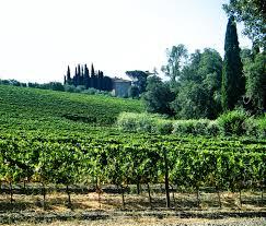 vineyard home decor tuscan photography travel photography vineyard pistoia