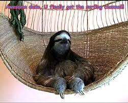 Funny Sloths Memes - funny sloths photos funny animals