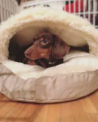 new puppy checklist must have supplies for your new puppy