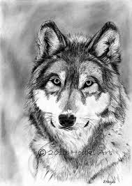 pictures see animal pencil sketch drawing art gallery