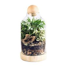 terrariums plants moss glass and fun uncommongoods