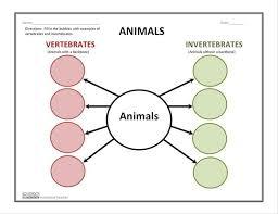 vertebrates and invertebrates animal graphic graphic organizers