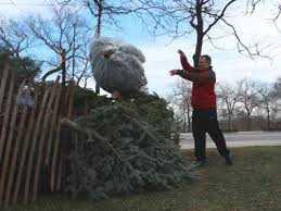 where you can recycle that christmas tree in your neighborhood