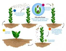 Reproduction In Flowering Plants - how do non flowering plants reproduce