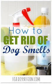 33 dog hacks you need to try today page 2 of 5 diy joy