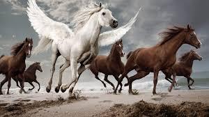 horses run animal mist horse free wallpaper racing horses hd 16