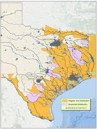 alligators in map alligators in map my