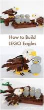 Best 25 Hospital Website Ideas Best 25 Baby Bald Eagle Ideas On Pinterest Pictures Of Bald