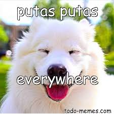 Putas Putas Everywhere Meme - arraymeme de putas putas everywhere