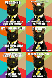 Business Cat Memes - oh cat puns it s so bad it s funny the good life pinterest