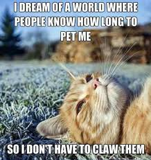 Funny Sad Meme - 18 hilarious sad cat problems that might explain why your cat s so