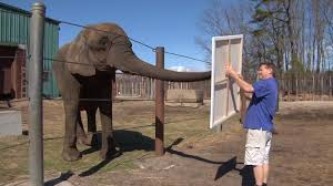 Six Flags Weather Nj Six Flags Elephant Shows Off Artistic Talent Video Njtv News