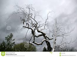 tree from iron royalty free stock image image 35872886