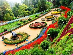 most beautiful rose gardens in the world decorating clear
