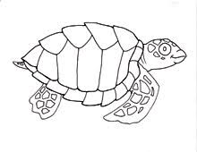 coloring pages sea turtles quest nest waterlife