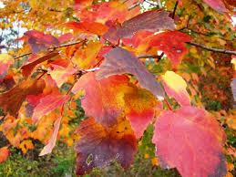 east texas fall foliage scenic drives foliage reports 2017