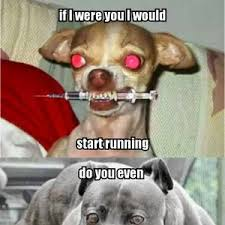 Silly Dog Meme - hilarious dog memes by drago2003521 meme center