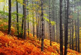 forests hillside forest hills color autumn orange colors fall red