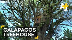 Coolest Tree Houses This Man U0027s Trash Built The World U0027s Coolest Treehouse Youtube