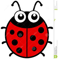 ladybug big eyes stock photos images u0026 pictures 27 images