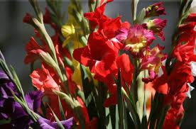 Blumen Bade Ambulante Badekur Wellnesshotel Mürz Bad Füssing