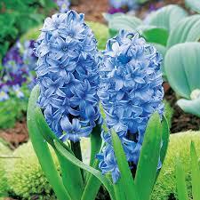 bulbs delft blue