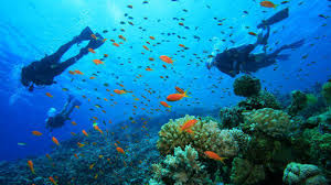 5 best places to go scuba diving in india india