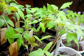 indoor garden plants need rest too
