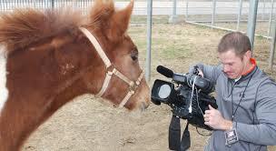 Channel 4 San Antonio Texas Animal Care Services